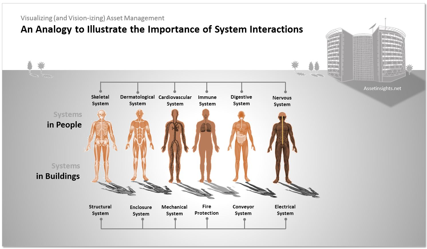 Human physiology as an analogy to illustrate the importance of system interaction.